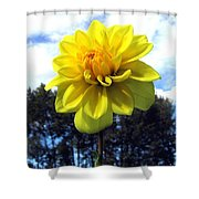 Painted Yellow Dahlia Shower Curtain