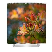 Painterly Rhodies Shower Curtain