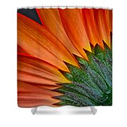 Painters Brush Shower Curtain
