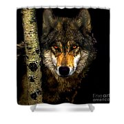 Painting ... Wolf In Aspen Grove Shower Curtain