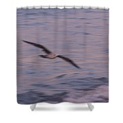 Painting Birds Shower Curtain