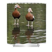 Pair Black-bellied Whistling-ducks Shower Curtain
