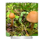Pair O Mushrooms Shower Curtain