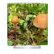Pair O Mushrooms Shower Curtain