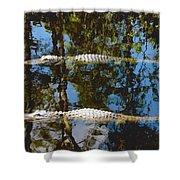 Pair Of American Alligators Shower Curtain
