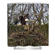 Pair Of Bald Eagles At Their Nest Shower Curtain
