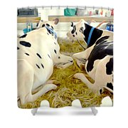 Pair Of Black And White Cows 3 Shower Curtain