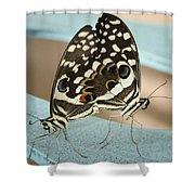 Pair Of Citrus Swallowtail Butterflies  Shower Curtain