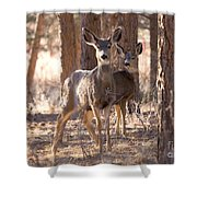 Pair Of Does Shower Curtain