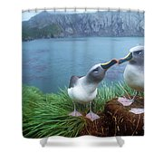 Pair Of Grey-headed Albatross Shower Curtain