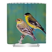 Pair Of Lesser Goldfinches Shower Curtain