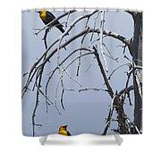 Pair Of Male Yellow-headed Blackbird   #9521 Shower Curtain