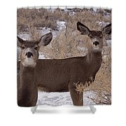 Pair Of Mule Deer   #7584 Shower Curtain