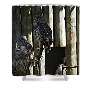 Pair Of Owls Shower Curtain