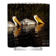 Pair Of Pelicans   #6935 Shower Curtain