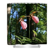 Pair Of Pink Lady Slippers  Shower Curtain