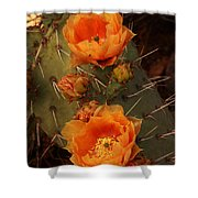 Pair Of Prickly Pear Cactus Blooms In The Sandia Foothills Shower Curtain