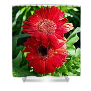 Pair Of Red Gerber Daisy Flowers With Ladybug Shower Curtain