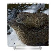 Pair Of River Otters   #1266 Shower Curtain