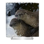 Pair Of River Otters   #1301 Shower Curtain