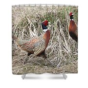 Pair Of Roosters Shower Curtain