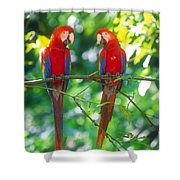 Pair Of Scarlet Macaws Shower Curtain