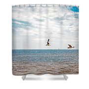 Pair Of Seagulls Shower Curtain