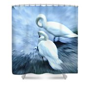 Pair Of Swans Shower Curtain