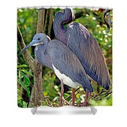 Pair Of Tricolored Heron At Nest Shower Curtain