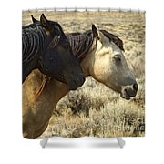 Pair Of Wild Mares   #0469 Shower Curtain
