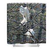 Paired Egrets At Lake Martin Louisiana Shower Curtain