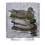 Paired Shower Curtain