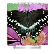 Palamedes Swallowtail Papilio Palamedes Shower Curtain