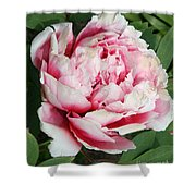 Pale And Dark Pink Peony Shower Curtain