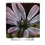 Pale Blue Flower Backlit Shower Curtain