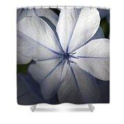 Pale Blue Plumbago Flower Close Up  Shower Curtain
