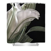 Pale Lily Shower Curtain