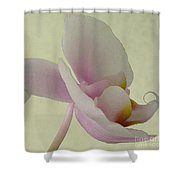 Pale Orchid On Cream Shower Curtain