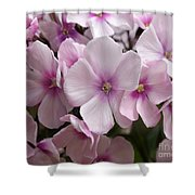 Pale Pink 3 Shower Curtain