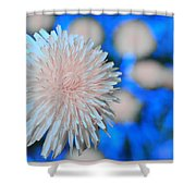 Pale Pink Bright Blue Shower Curtain