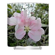 Pale Pink Crabapple Blossom Shower Curtain