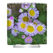 Pale Pink Fleabane Blooms With Decorations Shower Curtain