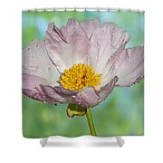 Pale Pink Peony Shower Curtain