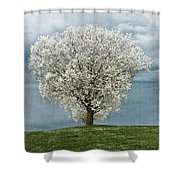 Pale White Tree On Cloudy Spring Day E83 Shower Curtain