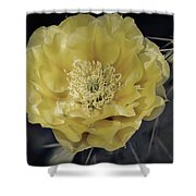 Pale Yellow Prickly Pear Bloom  Shower Curtain
