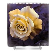 Pale Yellow Rose Shower Curtain