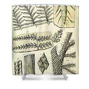 Paleozoic Flora, Calamites, Illustration Shower Curtain