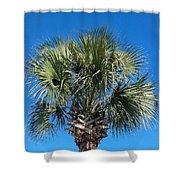 Palm Against Blue Sky Shower Curtain