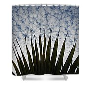 Palm And Clouds Shower Curtain