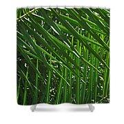 Palm Crosshatch Shower Curtain